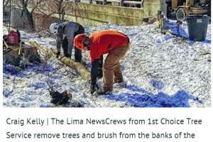 Lima Clearing Invasive Trees, Brush from Ottawa River Bank